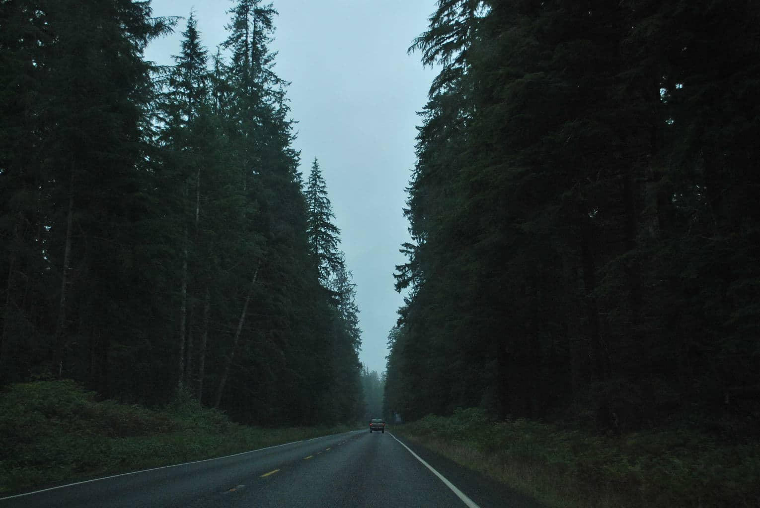 Love the feeling of driving through these trees.