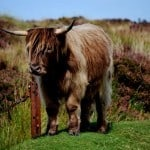 Wildlife of Dartmoor National Park: A Photo Essay
