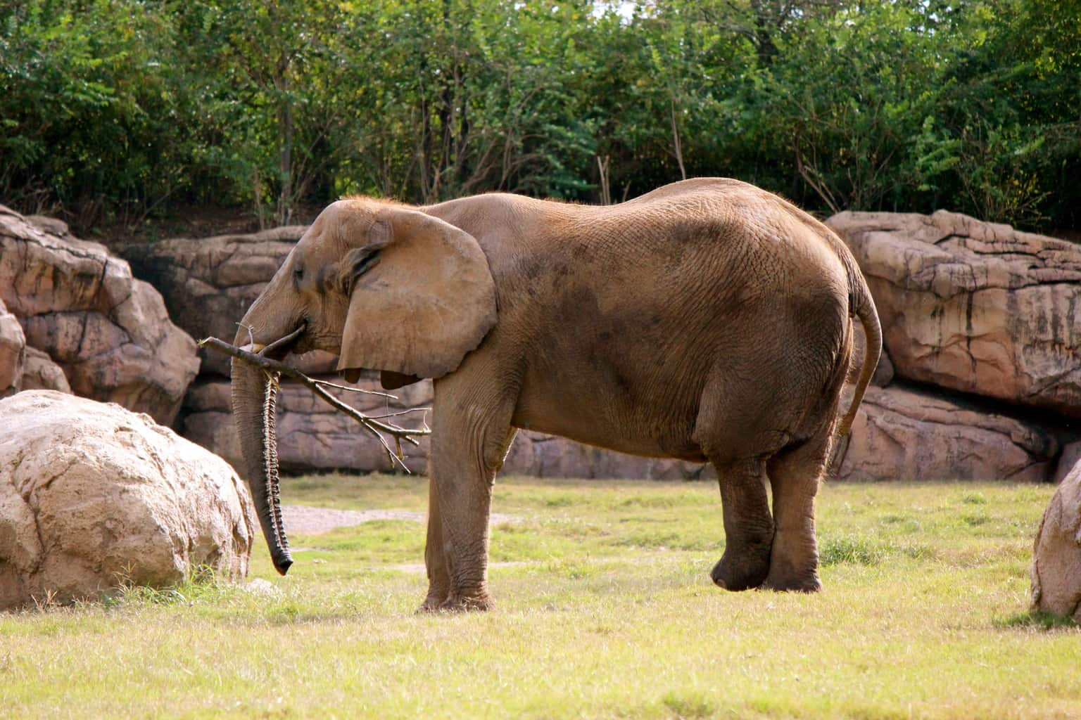 photo essay nashville zoo at grassmere a southern gypsy s african elephant