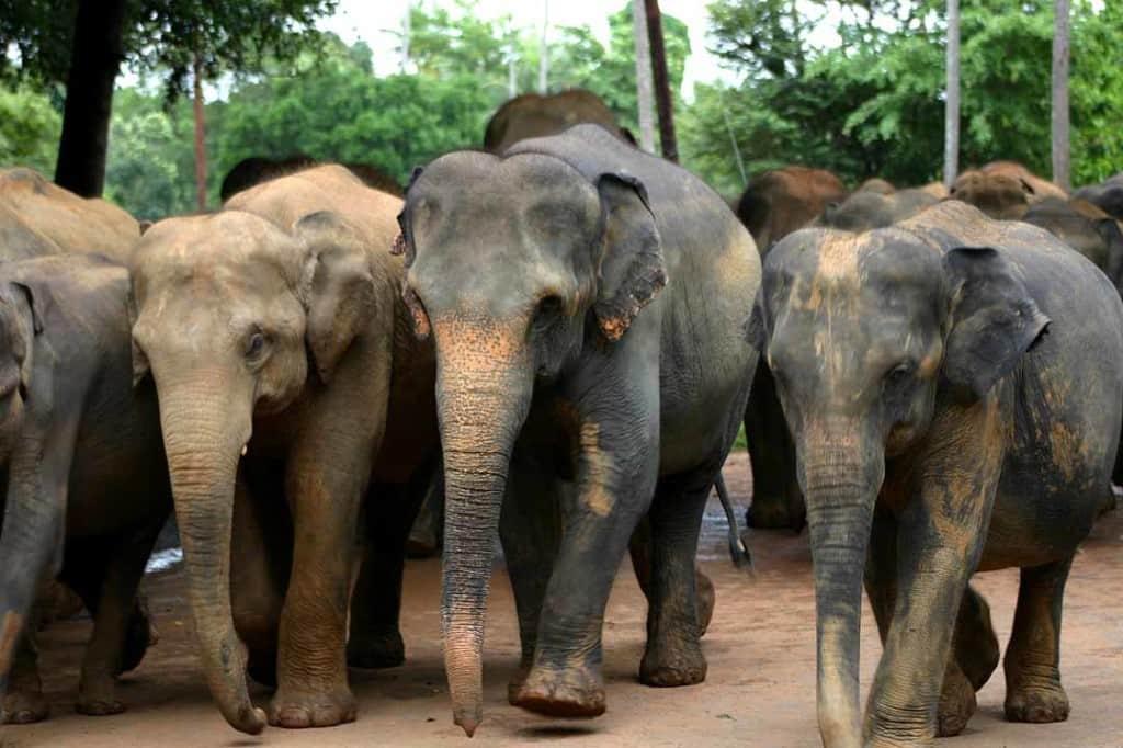 elephants, asia, thailand