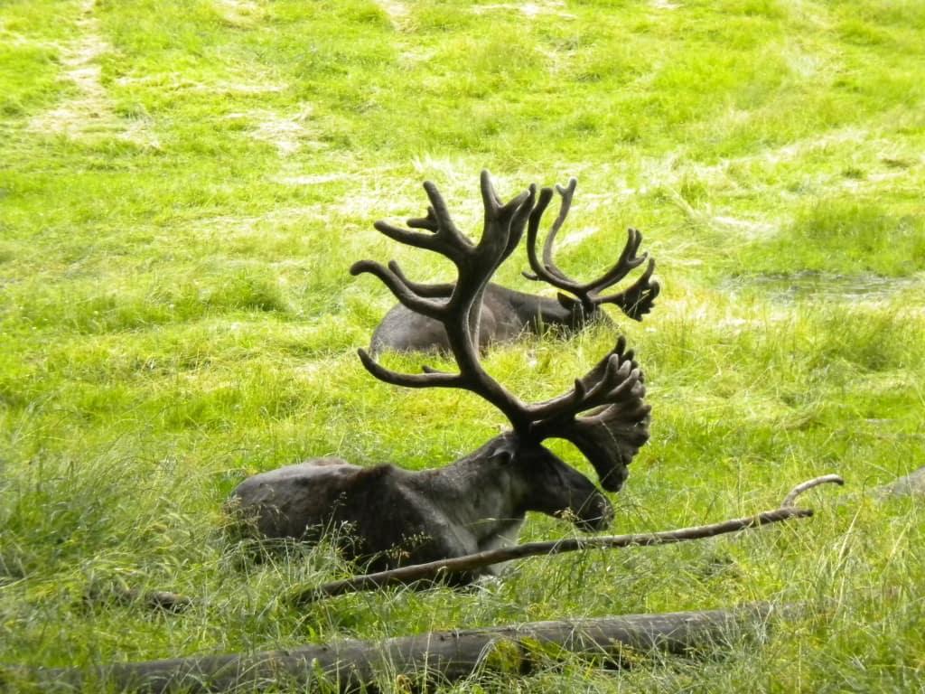 northwest wildlife trek, washington