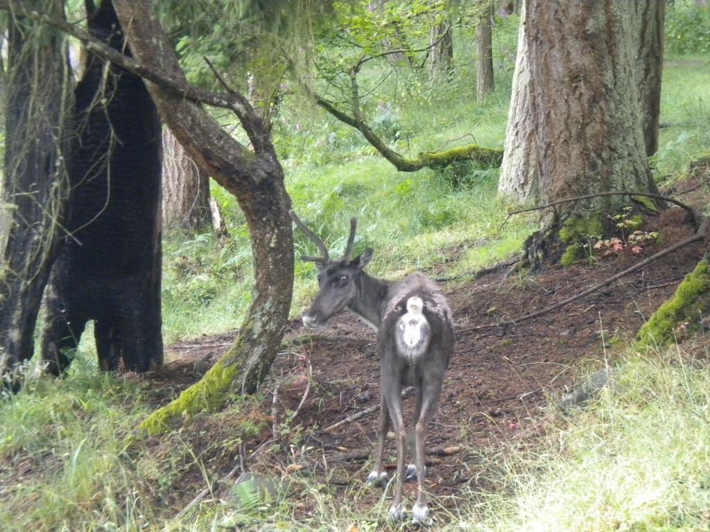 wildlife trek, washington