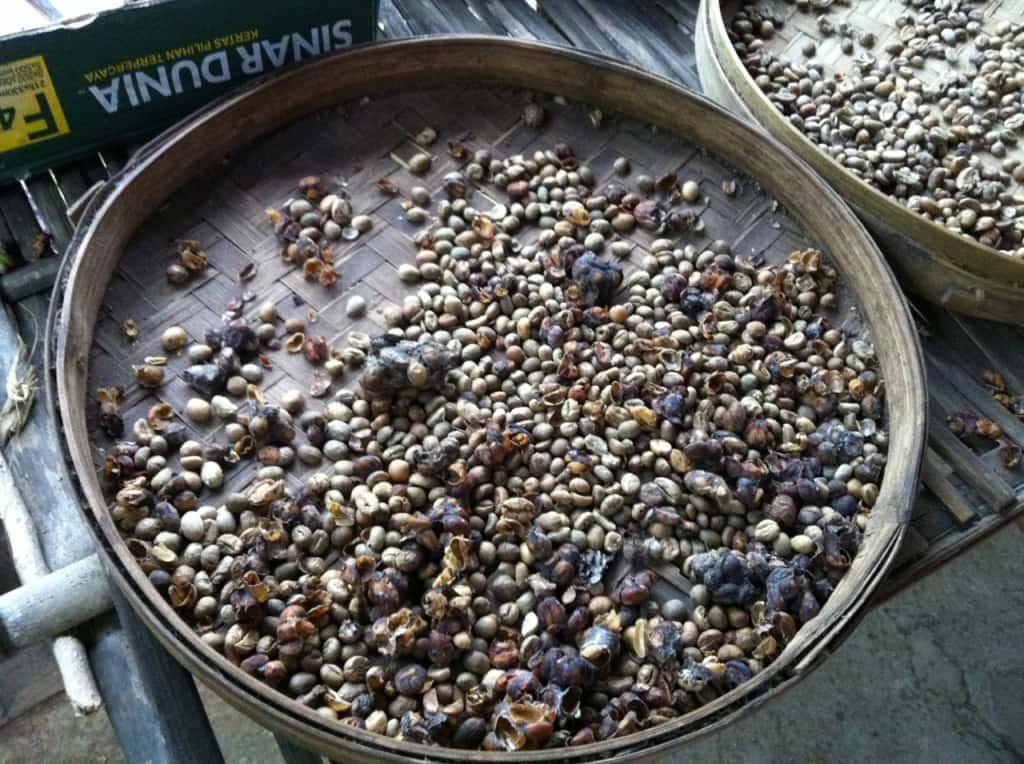 kopi luwak, bizarre foods, indonesia