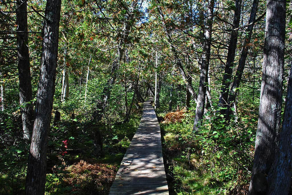 hiking trails, north country trail