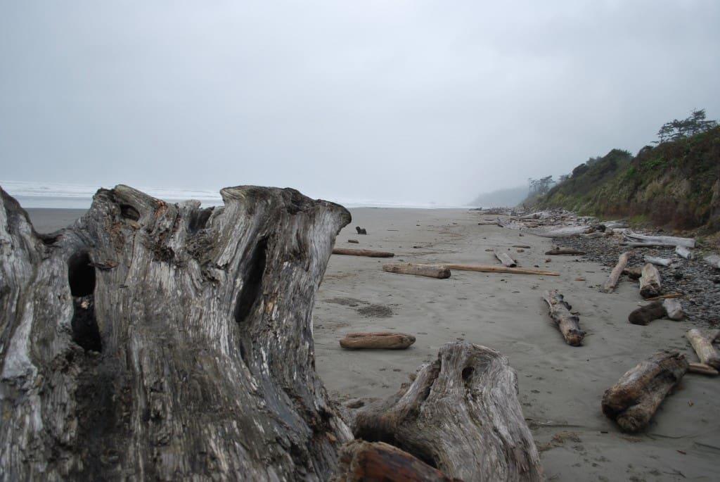 olympic coastline, pacific northwest