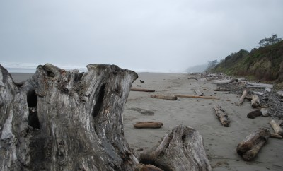 olympic coastline, pacific northwest