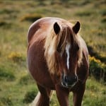 Photo of the Week : Wild Pony