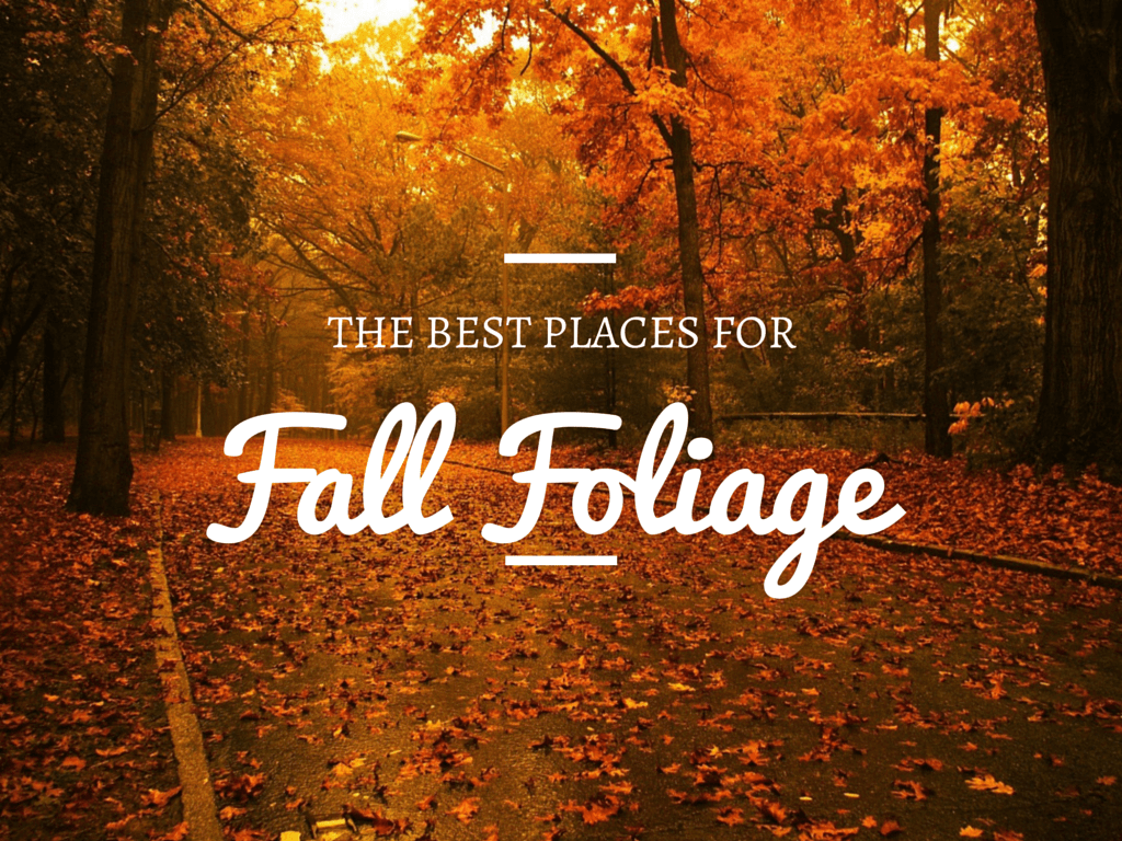 The Best Places to see Fall Folliage