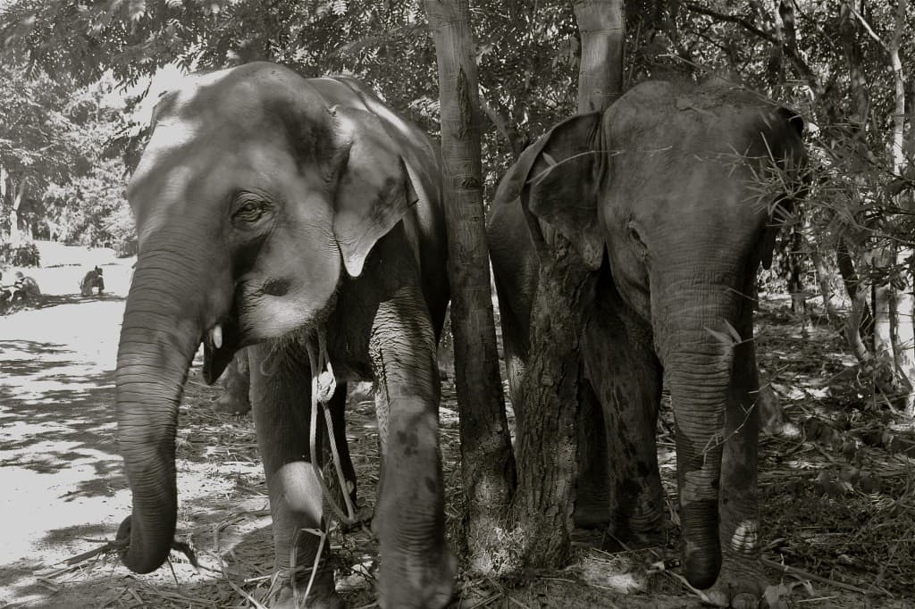 ELEPHANT VILLAGE SURIN
