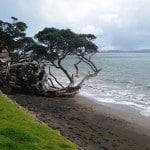 Shades of Blue and Green at Shakespear Regional Park, New Zealand @raasta2014