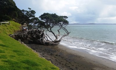 SHAKESPEAR REGIONAL PARK | AUCKLAND, NEW ZEALAND