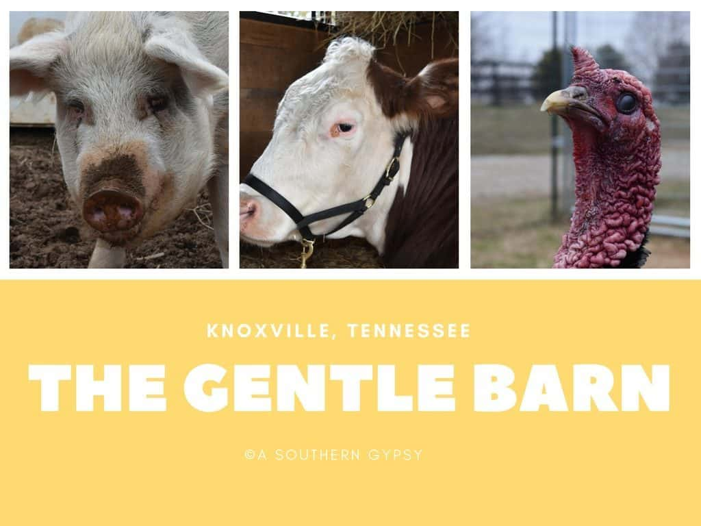 Visiting The Gentle Barn in Tennessee