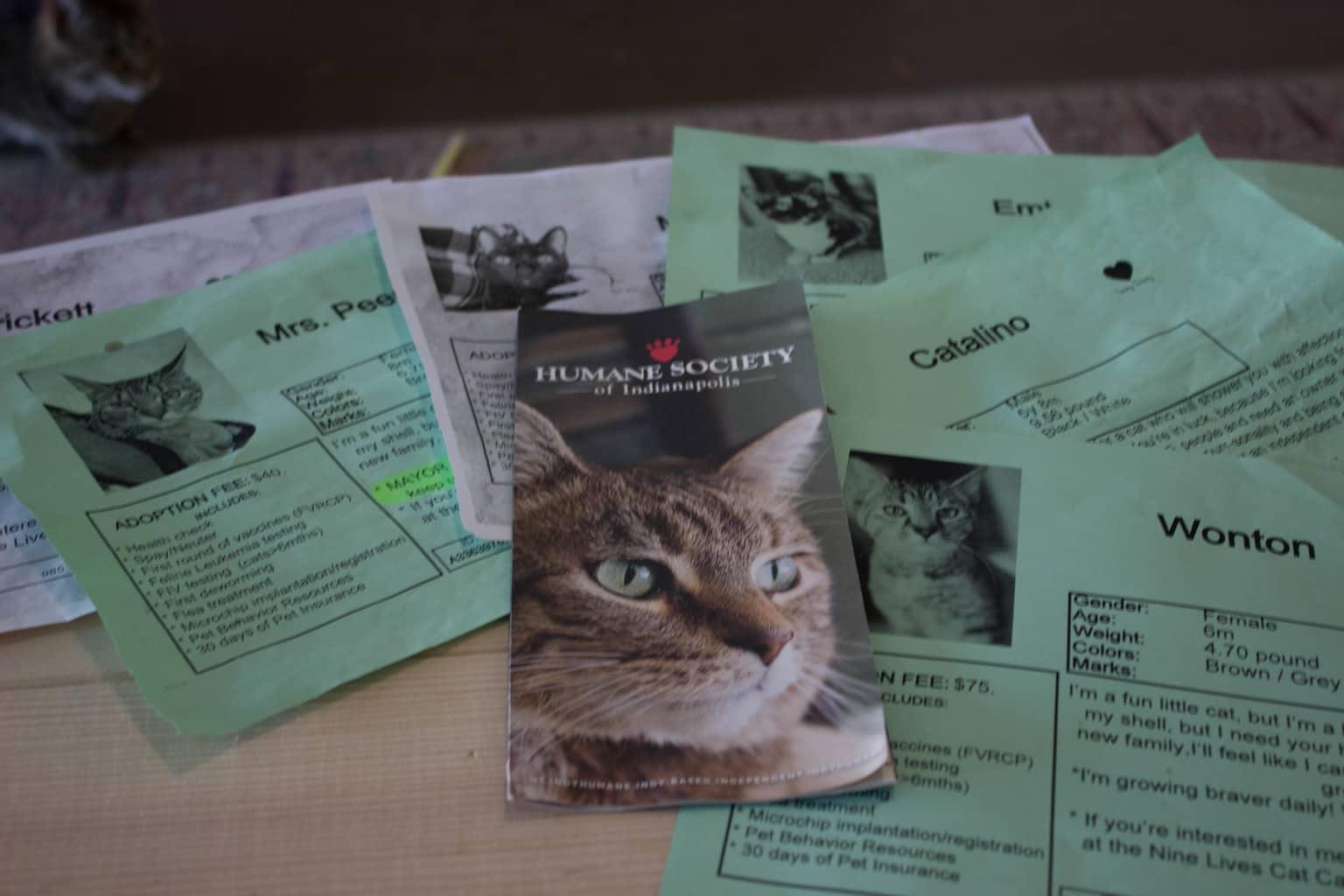 NINE LIVES CAT CAFE INDY