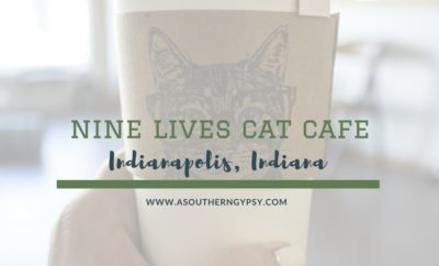 NINE LIVES CAT CAFE INDIANAPOLIS INDIANA