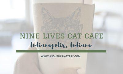 NINE LIVES CAT CAFE INDIANAPOLIS INDIANA