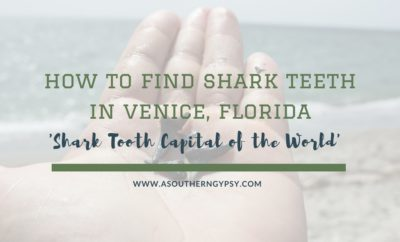 FIND SHARK TEETH IN VENICE, FLORIDA