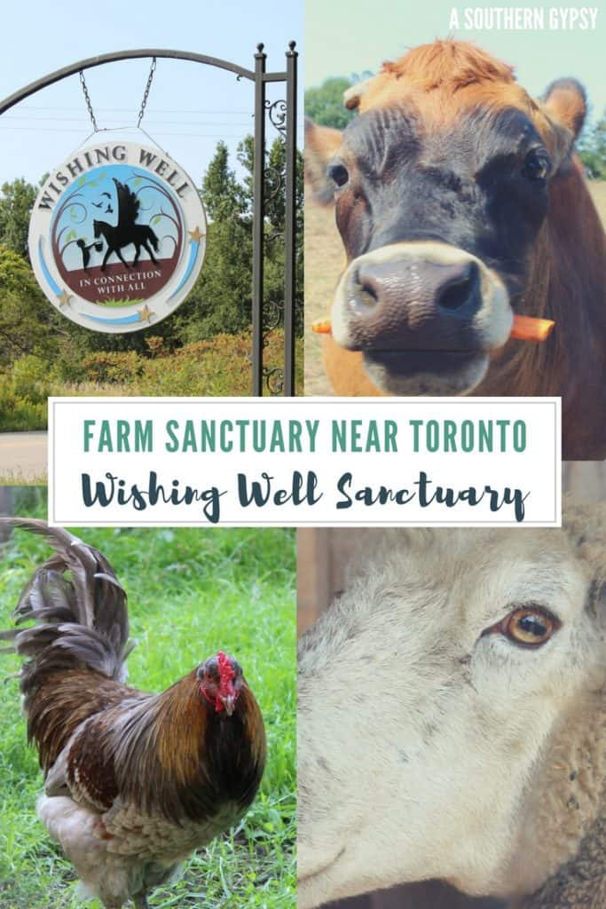 FARM SANCTUARY NEAR TORONTO