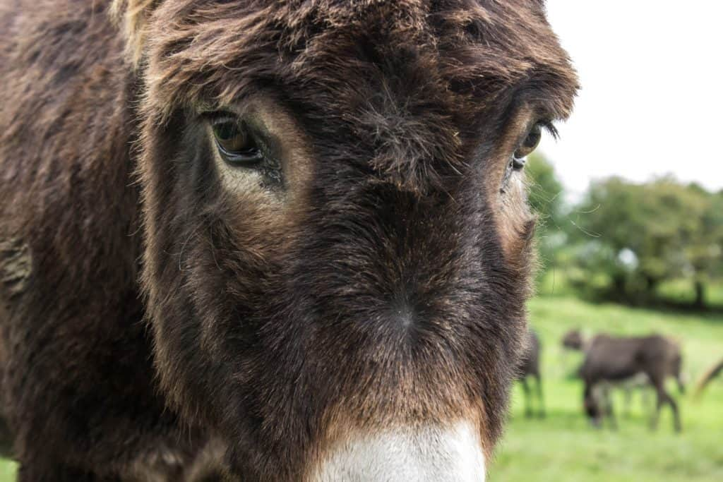 donkey sanctuary ireland