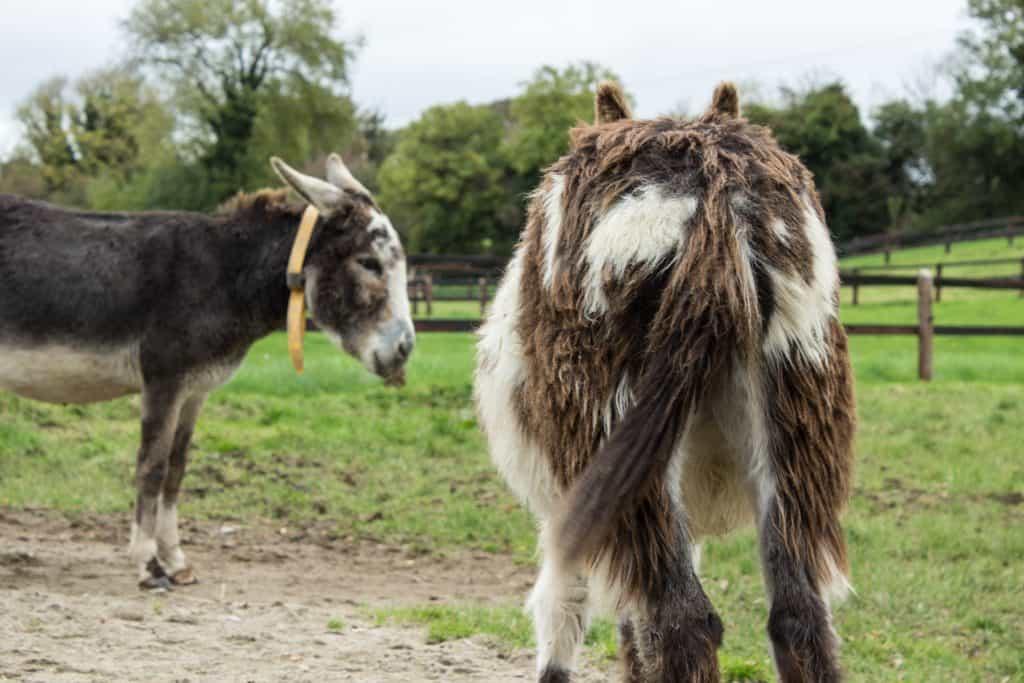 donkey sanctuary ireland