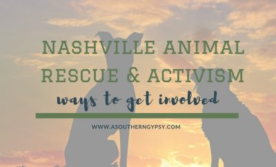 nashville animal rescue