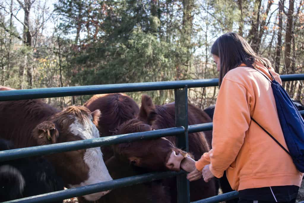 animal sanctuary missouri