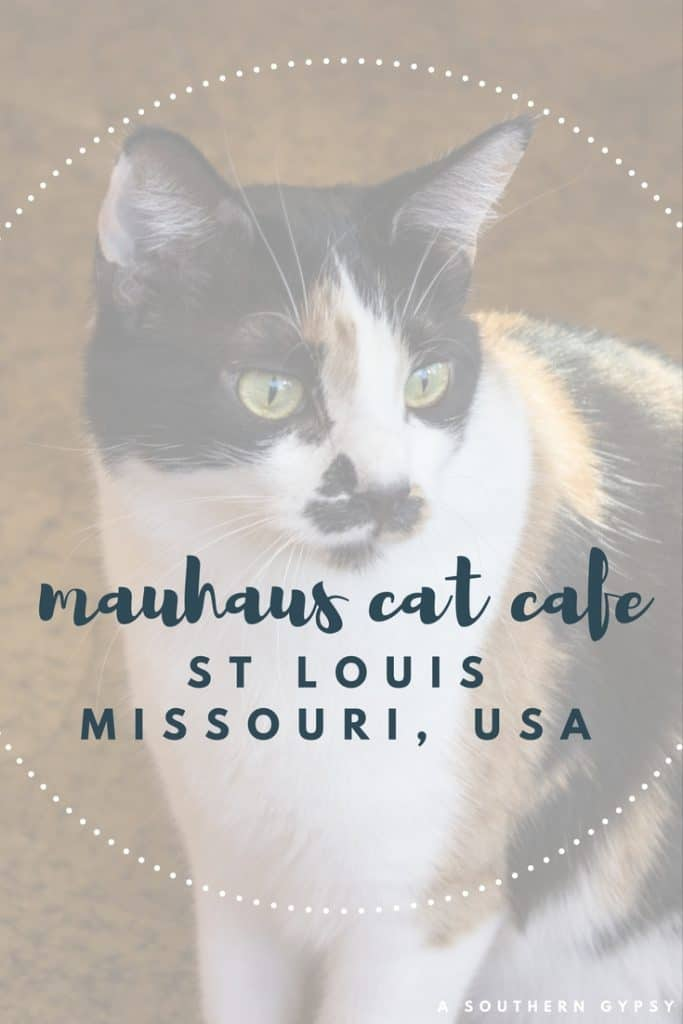 cat cafe st louis