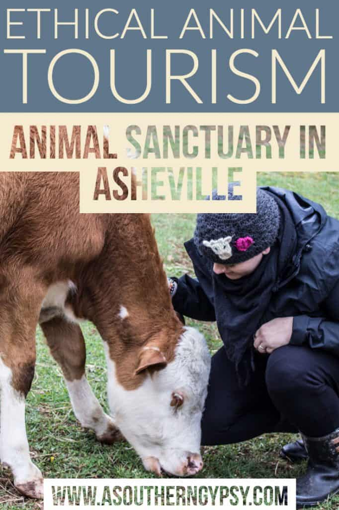 animal haven of asheville