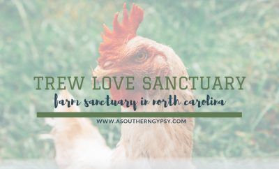 TREW LOVE SANCTUARY