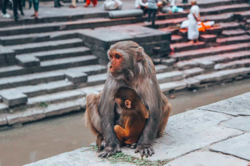 vegan in nepal