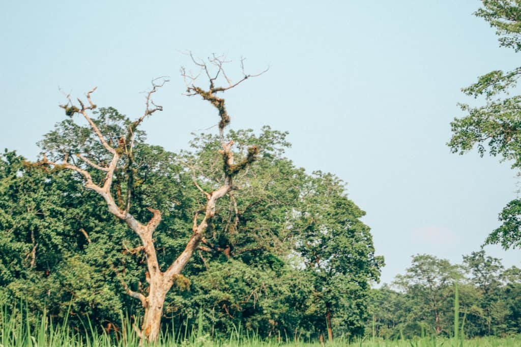 Chitwan Jungle Safari + Other Things to Do in Chitwan National Park