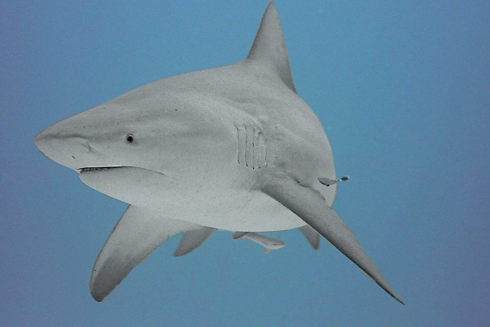 Best Places to Dive with Sharks | Amazing Places to Dive