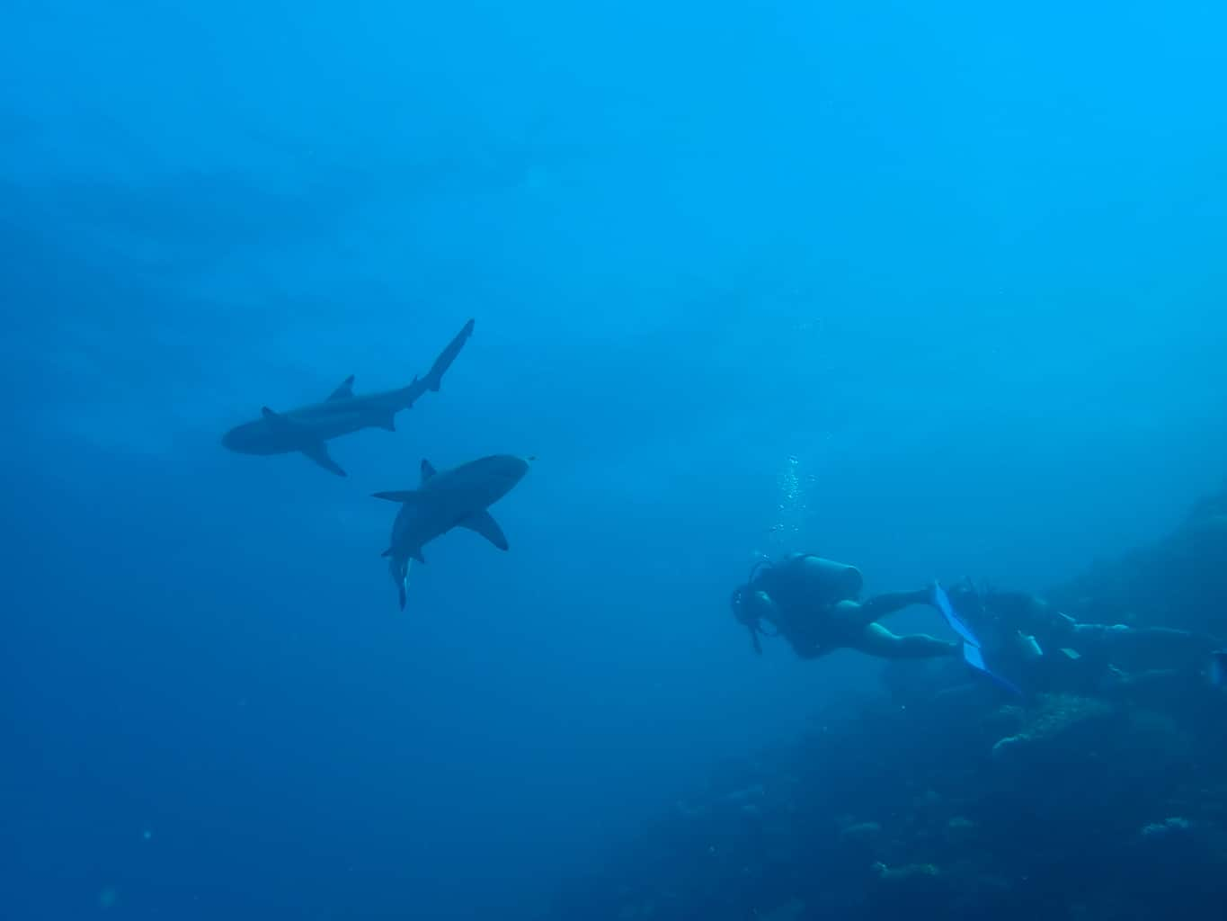 best places to dive with sharks