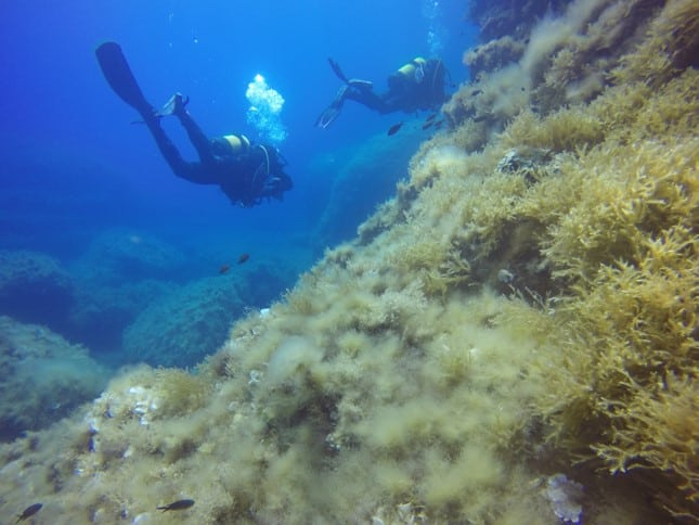 gifts for divers | diving in malta