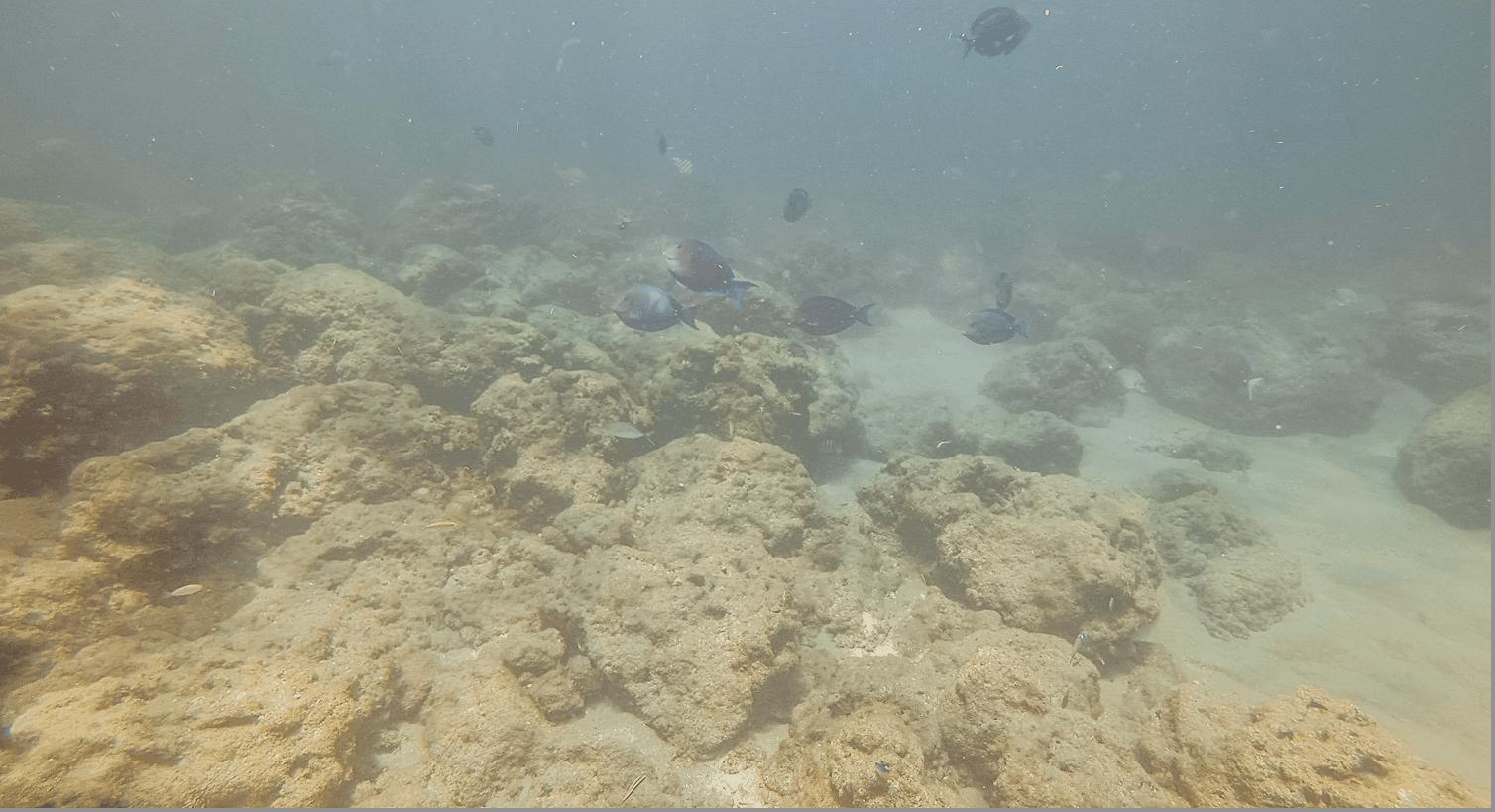 turtle reef deerfield beach pier