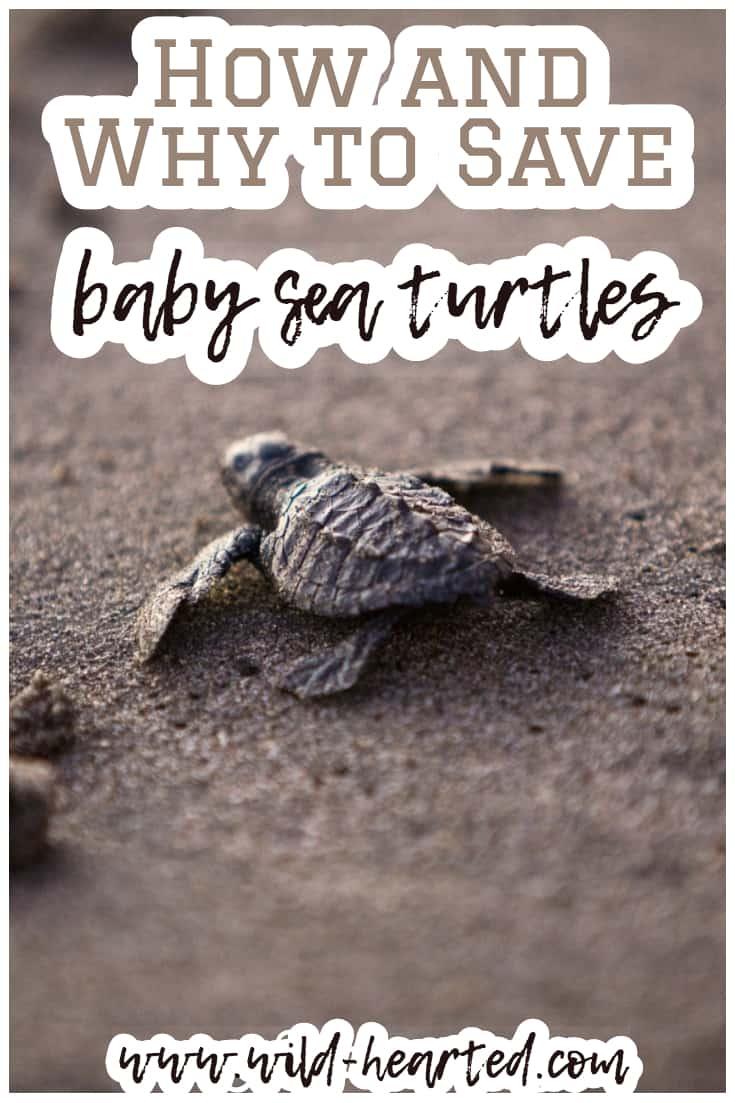 sea turtle rescue florida