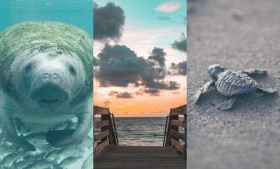 ecotourism in florida
