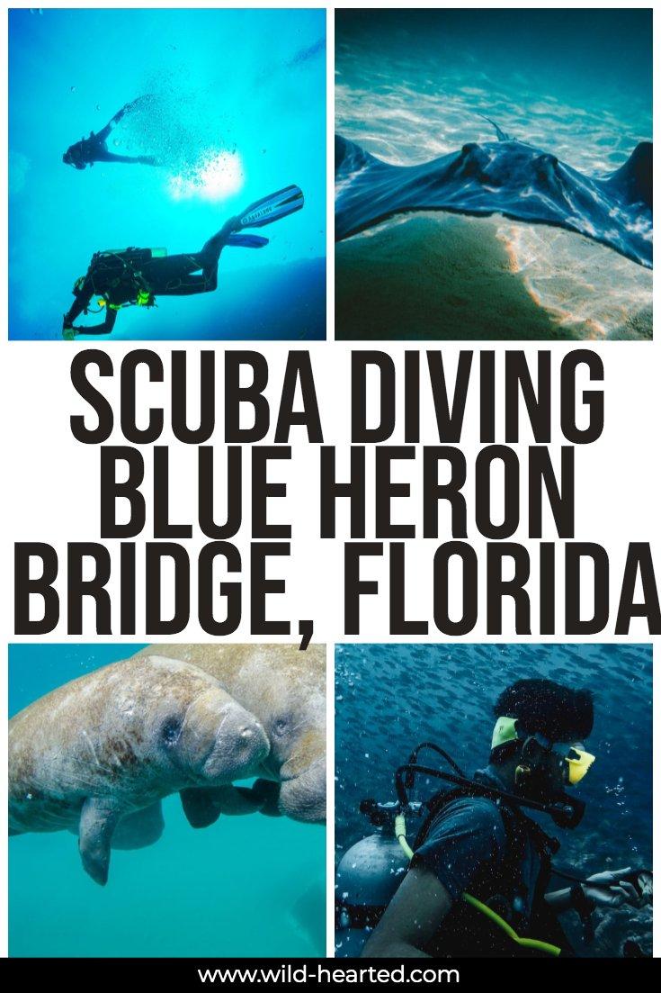 blue heron bridge scuba