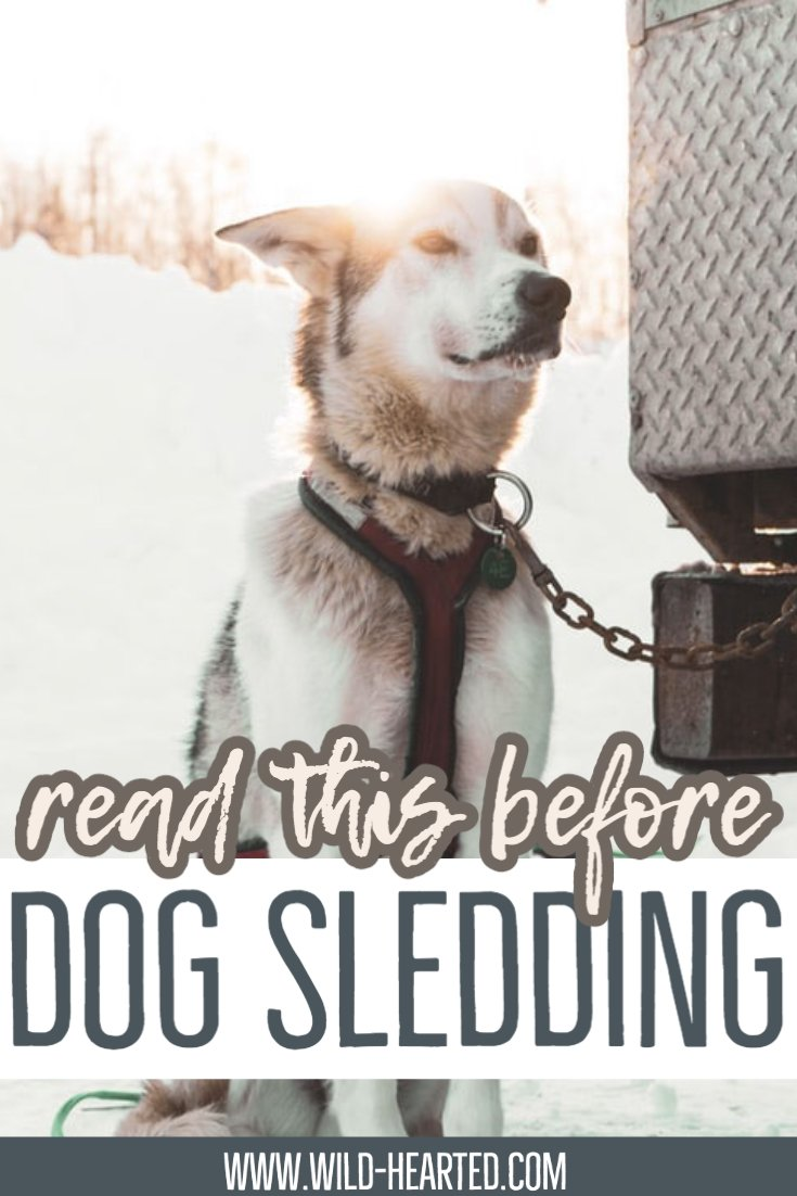 facts about dog sledding