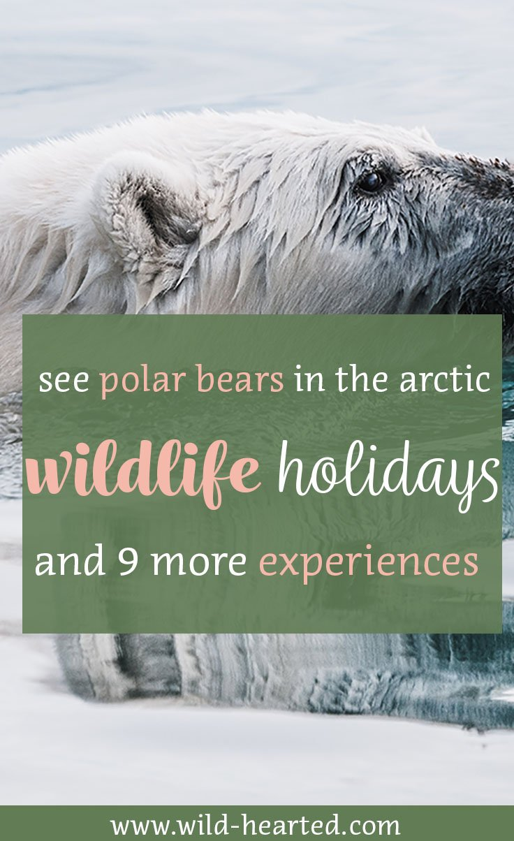 wildlife holidays