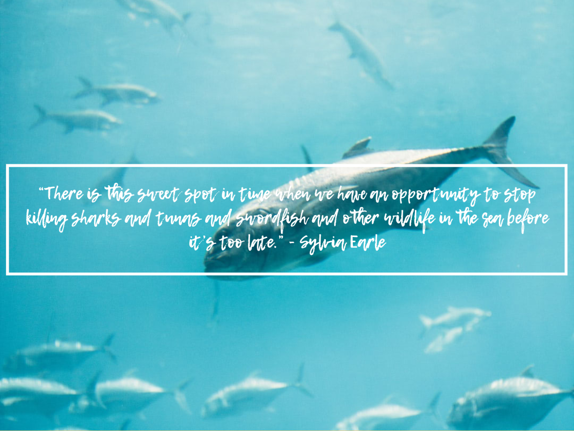 sylvia earle quotes