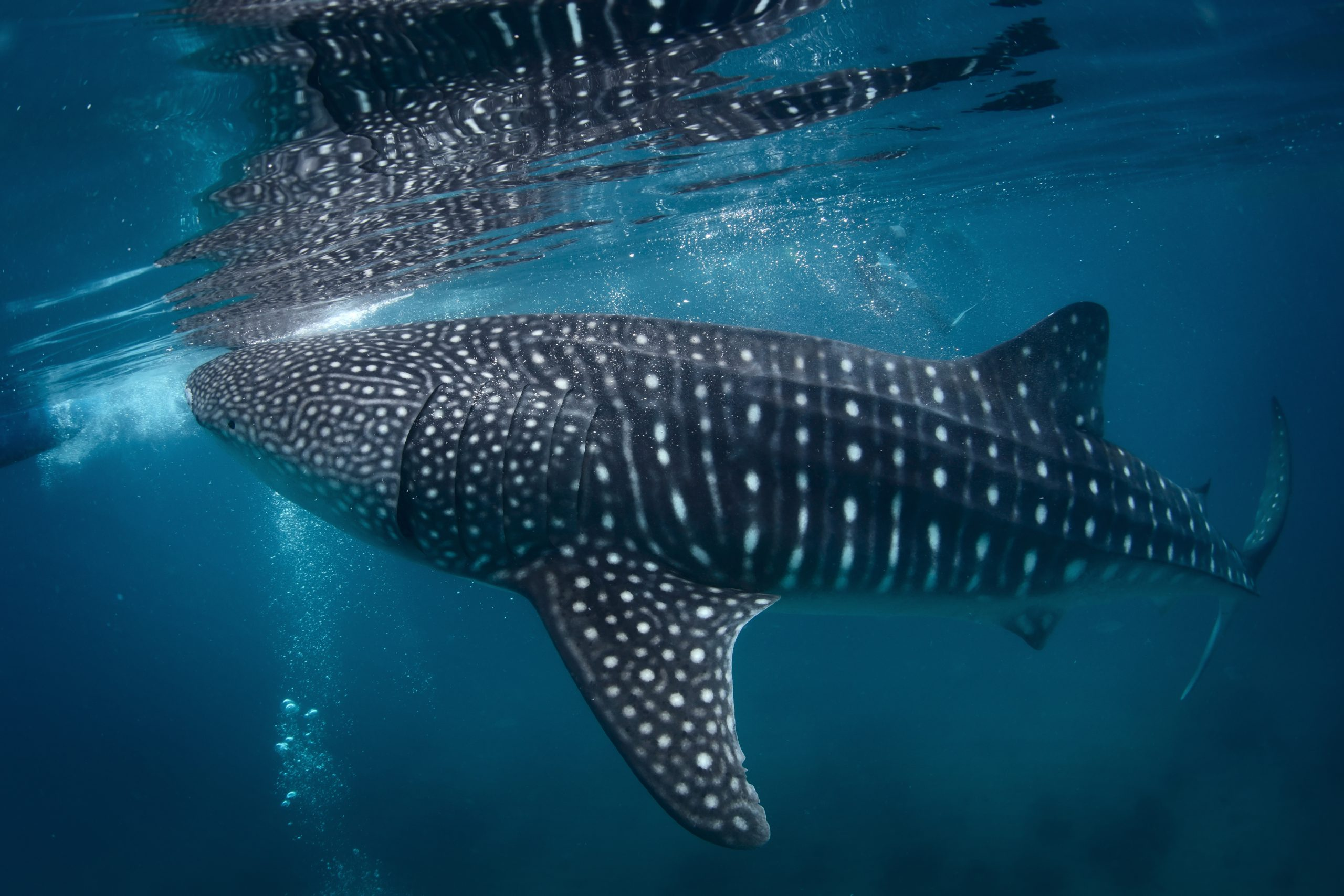 marine wildlife bucket list